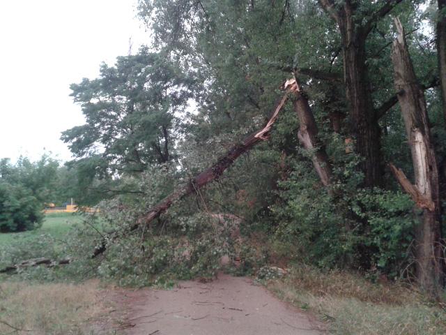 drzewa-burza-wisla-praga-a