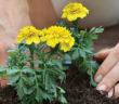 kwiaty-sadzenie-balkon